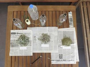 Local herbs