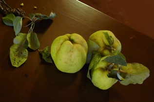 Kydonia (fruit) / Kydonia (city-state)